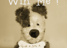 #Competition: Give a Dog a Home #win