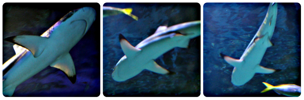 Places to go with Kids: Sea Life Aquarium Manchester, Shark Pictures