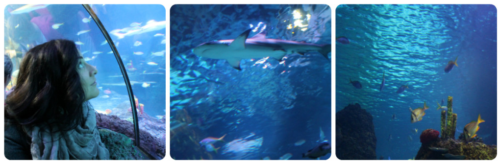Places to go with Kids: Sea Life Aquarium Manchester, Aquarium