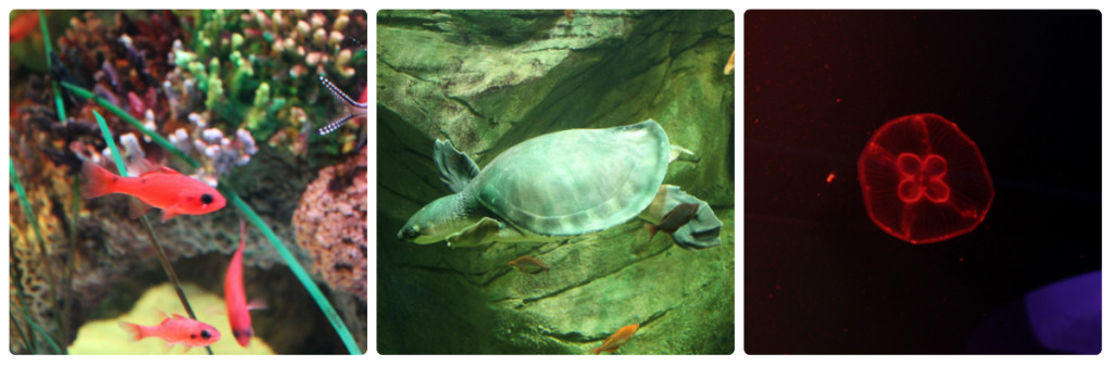 Places to go with Kids: Sea Life Aquarium Manchester Fish, Turtles, Jelly Fish