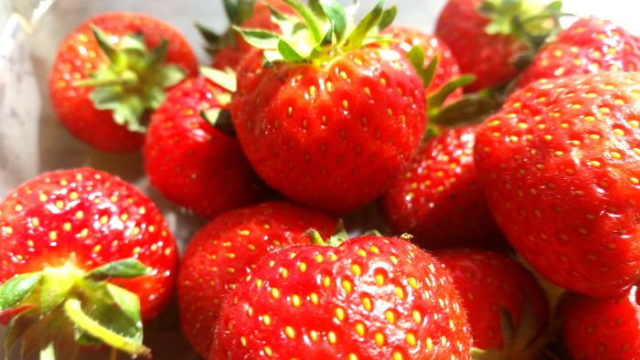 Gardening with kids - Strawberries