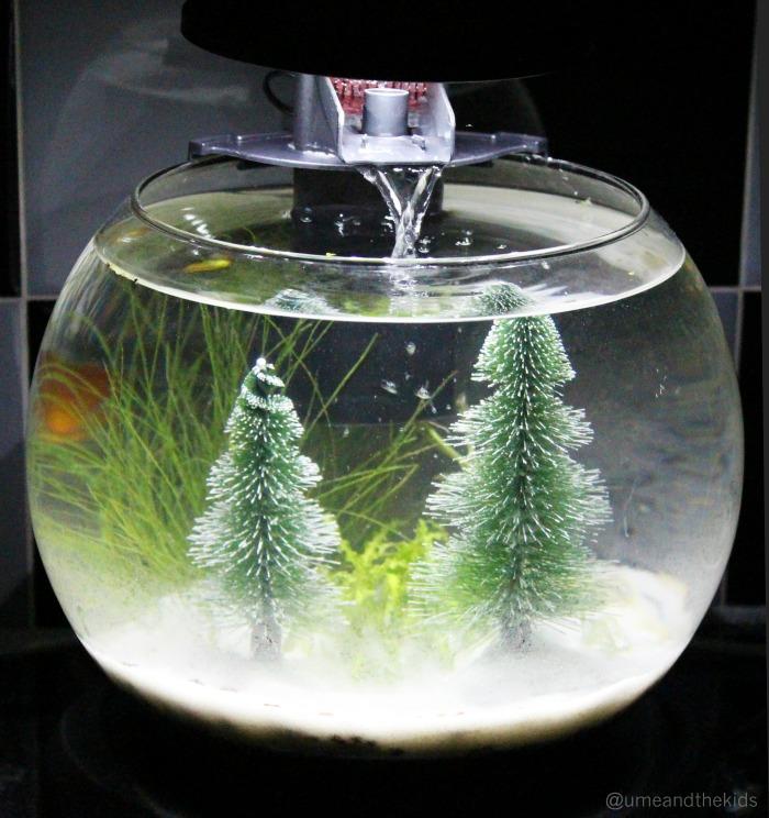 cascade globe review creating a show stopping aquarium