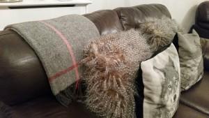 Susie Watson Design Shetland Rug