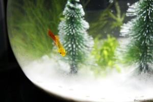 Tetra Cascade Globe Review - Fish Christmas Scene 3